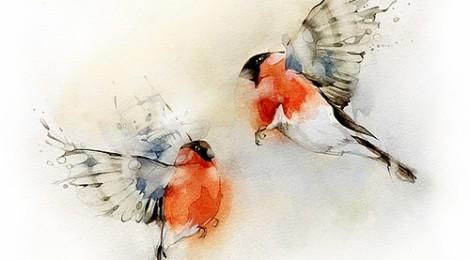 Inspiración: pájaros