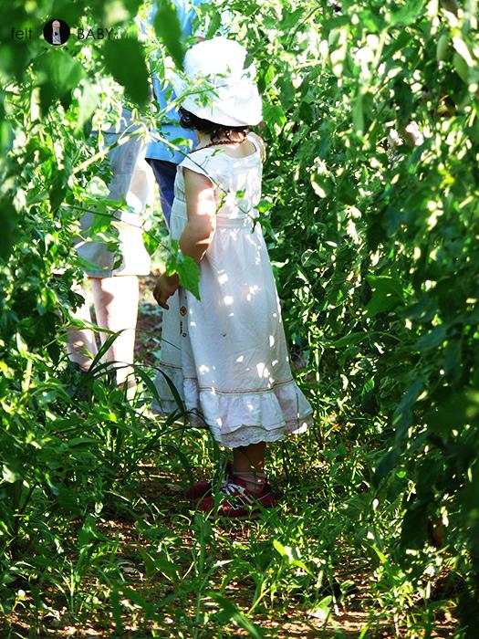 Picnic huerto jugar a Alicia en el país de la maravillas c