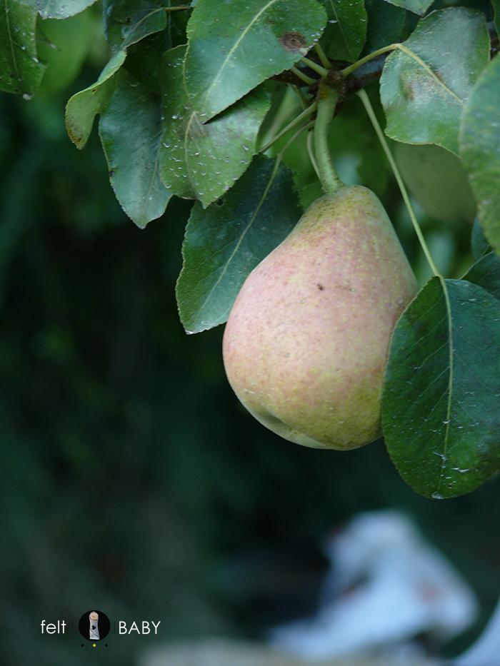 Picnic huerto pera en árbol