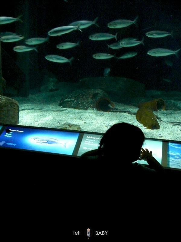 Escapada a Valencia oceanografic mirando peces